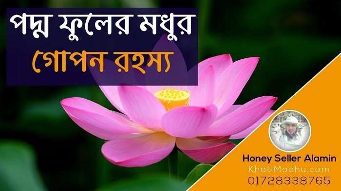 lotus flower, poddo fuler modhu