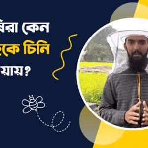 Read more about the article মৌ চাষিরা কেন মৌমাছিকে চিনি খাওয়ায়? (আসল সত্য জানুন)